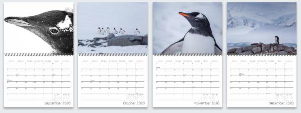2020 Penguin Calendar, Lauri Novak